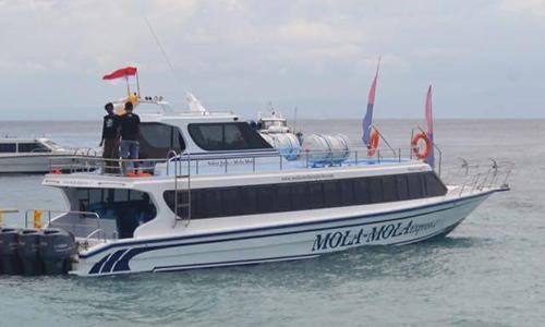 Mola Mola Express